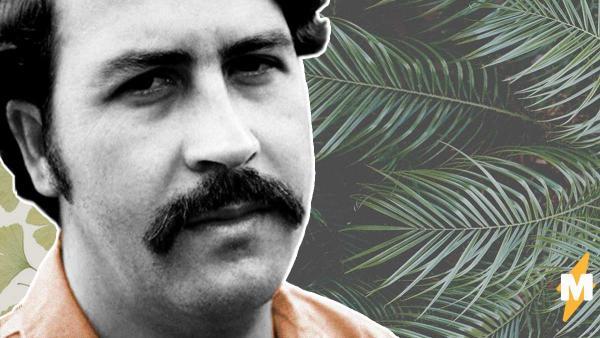 Мужчина в одиночку спас экологию родной страны, но героем не стал. Просто этим человеком был Пабло Эскобар