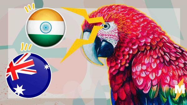Голодный попугай - горе в стране. Подсевшие на опиум пернатые наркоманы посеяли хаос в Индии и Австралии