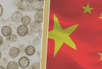 Пассажир автобуса в Китае внезапно умер от хантавируса. Что это за болезнь и стоит ли ее бояться, как COVID-19