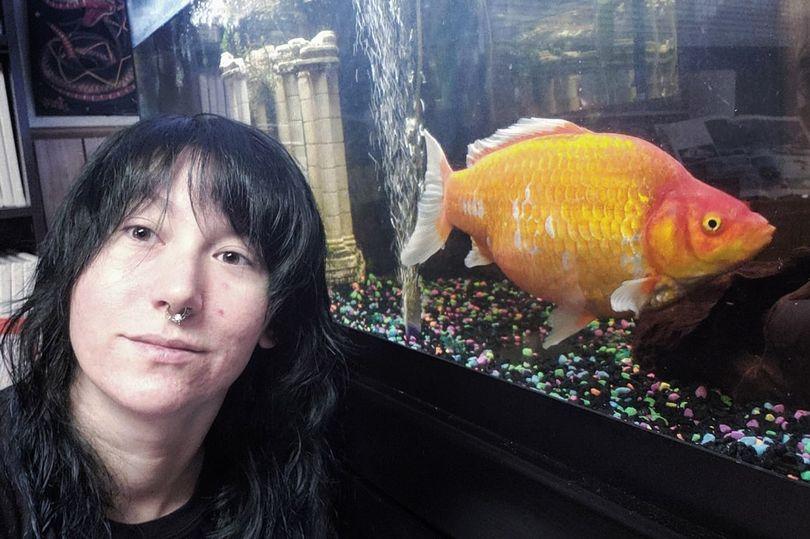 Девушка купила маленькую золотую рыбку невольно вырастила её монстром-канибалом