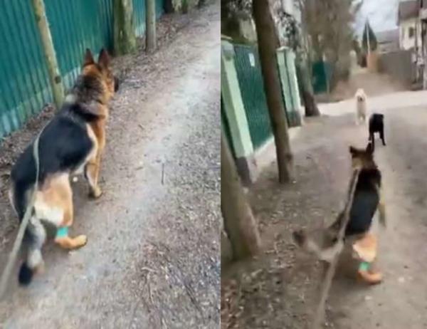 Гуф позволил своей собаке покусать пса и познал хейт. Оставлять это Долматову просто так люди не намерены