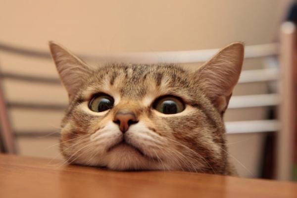 Сын попросил людей прислать фото котиков для его мамы на карантине. Но такой реакции он не ожидал