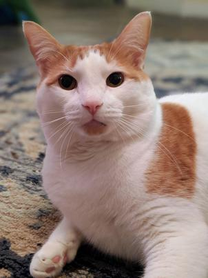 Кот довёл женщину до слёз, но дело не в кошачьем хулиганстве. Просто она впервые в жизни услышала мурчание