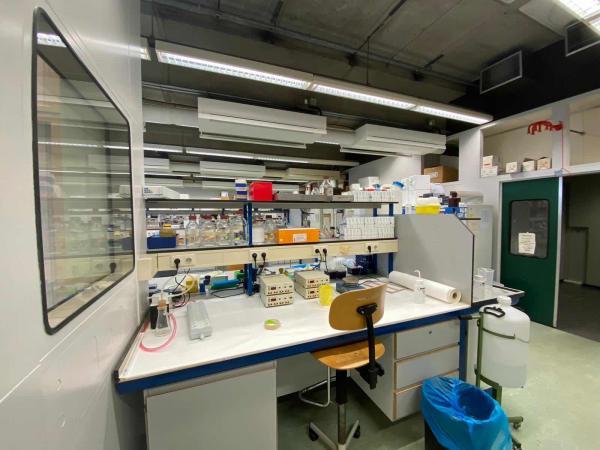 Нидерландские учёные нашли антитело против коронавируса. И это шанс для всего человечества