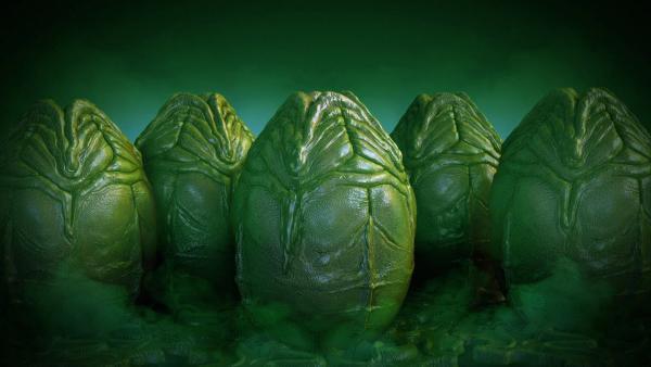 Люди увидели, как растёт китайская капуста, и их жизнь не будет прежней. Кажется, ксеноморфы выползают из неё