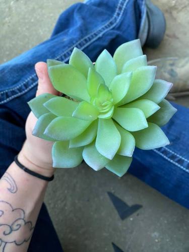 Девушка два года ухаживала за любимым цветком, и растение выглядело идеально. Но её забота тут ни при чём