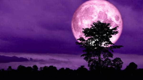 """В ночь на 8 апреля мир наблюдал """"Розовое суперлуние"""". Как это выглядит и почему не стоит верить ушам"""