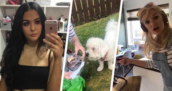 Дочь ревновала мать к собаке из-за торта и отомстила. А сладкого не получит - маму новый цвет пса едва не убил