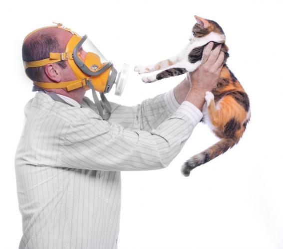 В крови кошек из Уханя нашли коронавирус. Кажется, во время пандемии любимцев придётся поменьше обнимать