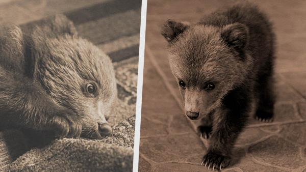 Мужчина завёл питомца, который легко его съест (когда вырастет). Он живёт с медведем, но выбора у него не было