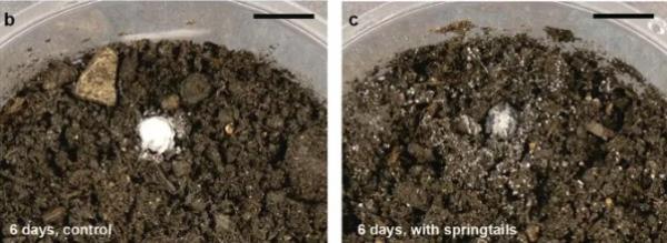 Учёные выяснили, откуда берётся запах весны, и ваш мир не будет прежним. На самом деле так пахнут микрожуки