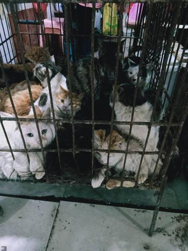 Китайцы вновь принялись есть летучих мышей, стоило эпидемии кончиться. Рынки с дикими животными снова открыты