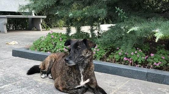Собака ждёт возвращение хозяина три года, но он не вернётся.