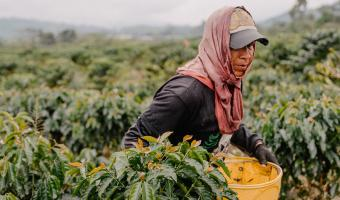 Коронавирус лишит людей ещё одного ценного ресурса — кофе. Ведь запасов едва хватит на 2020 год