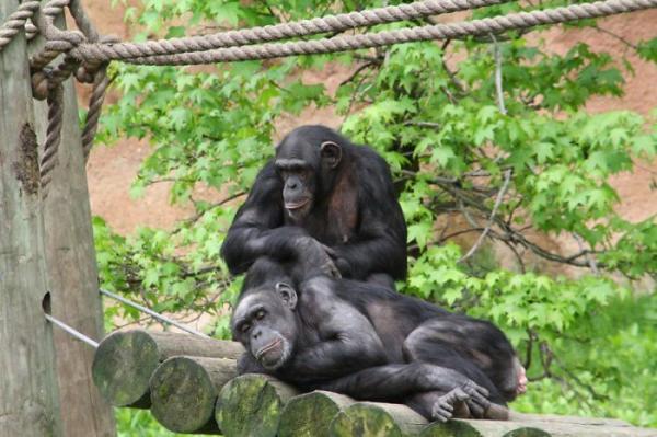 Животные в зоопарках страдают на карантине, но неволя тут ни при чём. Зверушек угнетает отсутствие людей