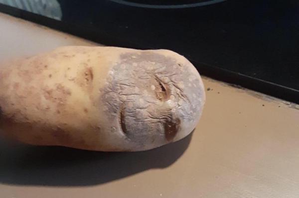 Девушка во время рабочего видеочата превратилась в картошку. И сделала это так забавно, что стала мемом