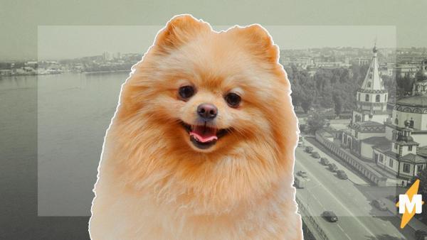 Собака впервые в России попала на карантин из-за коронавируса. Её лишили даже права выгула