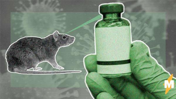 Ученые успешно протестировали вакцину от COVID-19. Она будет выглядеть как лейкопластырь