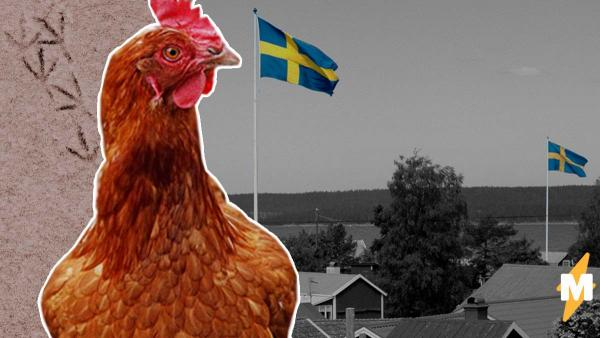 Шведские власти придумали способ предотвратить людные сборища. ВОЗ бы наверняка одобрила и этот особый путь