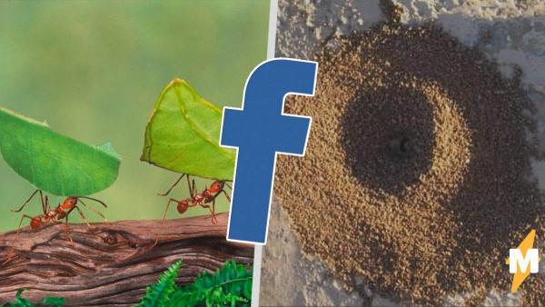 Люди становятся муравьями, живущими в муравейнике. И это не просто шутка, а новое хобби на карантине