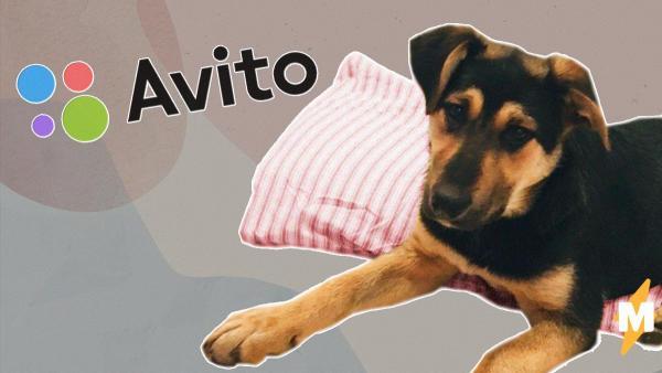 Люди зарабатывают на карантине с помощью Avito. В ход идут аренда собак, коты-обереги и прокат формы курьеров
