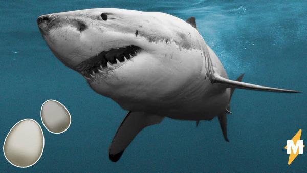 """""""Я что, всю жизнь детёнышей акулы ел?"""" Люди узнали, как выглядят акульи яйца, и их жизнь не будет прежней"""