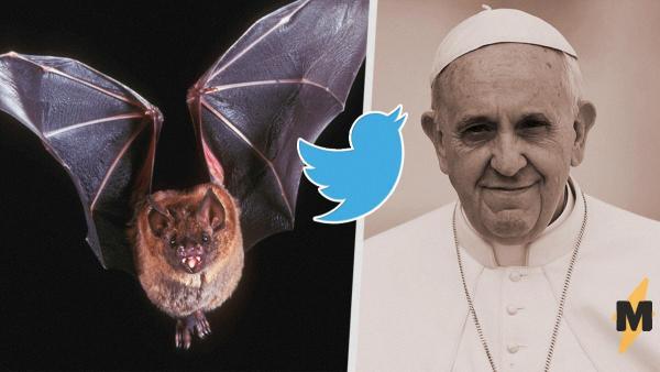 Летучие мыши - не грешники. Папа Римский получил лекцию в твиттере - и она сейчас пригодится всему миру