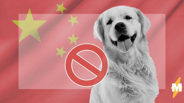 В Китае собак наконец официально запретили употреблять в пищу. Отказаться придётся от мяса альпак и лисиц