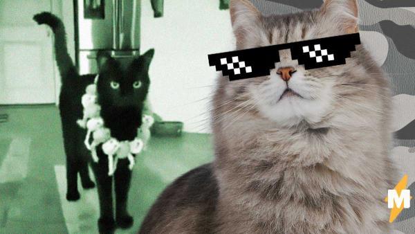 Люди на самоизоляции открыли для себя кошачьи суперсилы. Теперь питомцы ждут конец карантина больше хозяев