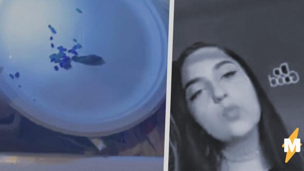 TikTok-блогерша воскресила собственную рыбку. Но люди думают, что девушка - Франкенштейн, а рыбка - её монстр