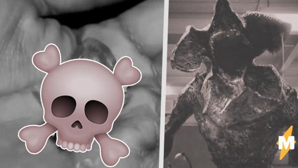"""В Сети появилось видео с неизвестным существом. И люди уверены - это Демогоргон из """"Очень странных дел"""""""