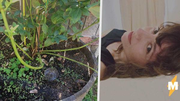 Женщина ловила жуков в саду с помощью пива. От насекомых ей избавиться не удалось, зато кое-кого споить - да