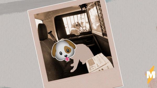 Коп отправился ловить бездомную собаку, но его ждал сюрприз. Бродяжка оказался не пёселем, а опасным милашкой