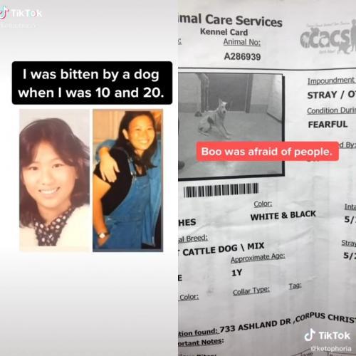 Женщина с боязнью собак решила приютить пса. И не прогадала, потому что стало намного счастливее, чем раньше