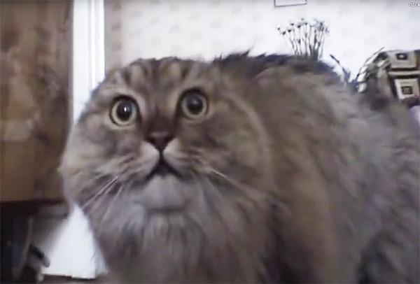 Как успокоить резвящегося по ночам кота. Простой лайфхак усмирит его, но люди уверены - месть придёт неминуемо
