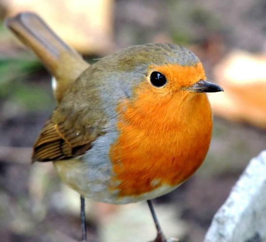 Птичка с удивительной внешностью осталась одна навеки из-за красоты. Жалеть тут не о чём: это спасло ей жизнь