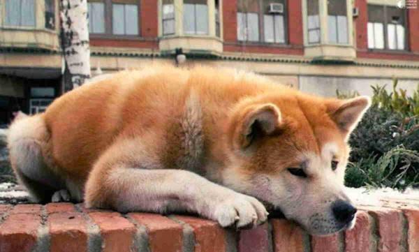 Мужчина бросил пса и уехал. Но тот три года ждёт его возвращения, не подозревая, как жестоко с ним поступили