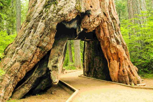 Женщина из зависти срубила деревья соседей и поплатилась за это. Месть вышла такой мощной, что лишила её дома