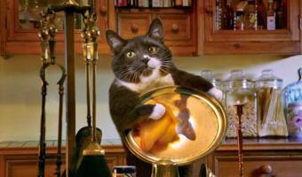 Кошка из Уханя 40 дней прожила одна в квартире. И показала такие навыки выживания, что Беар Гриллс отдыхает