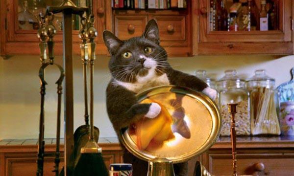 Кошка из Ухани 40 дней прожила одна в квартире. И показала такие навыки выживания, что Беар Гриллс отдыхает