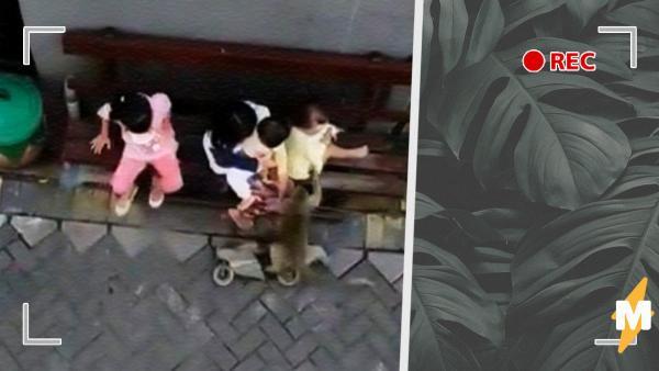 Обезьяна на видео вбежала во двор и унесла ребёнка. Так бывает? Да, но люди решили – жалеть надо примата