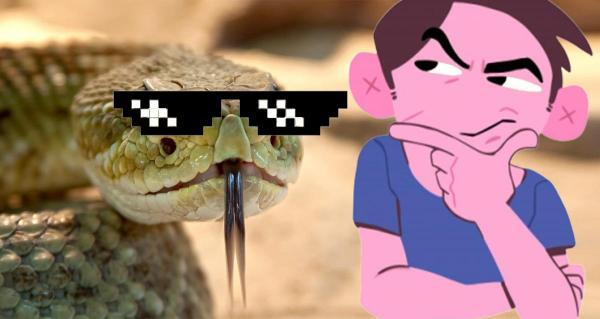 Люди увидели шагающую змею и решили, что она сломана. У этой гадюки-гусеницы всё же есть ноги - под кожей