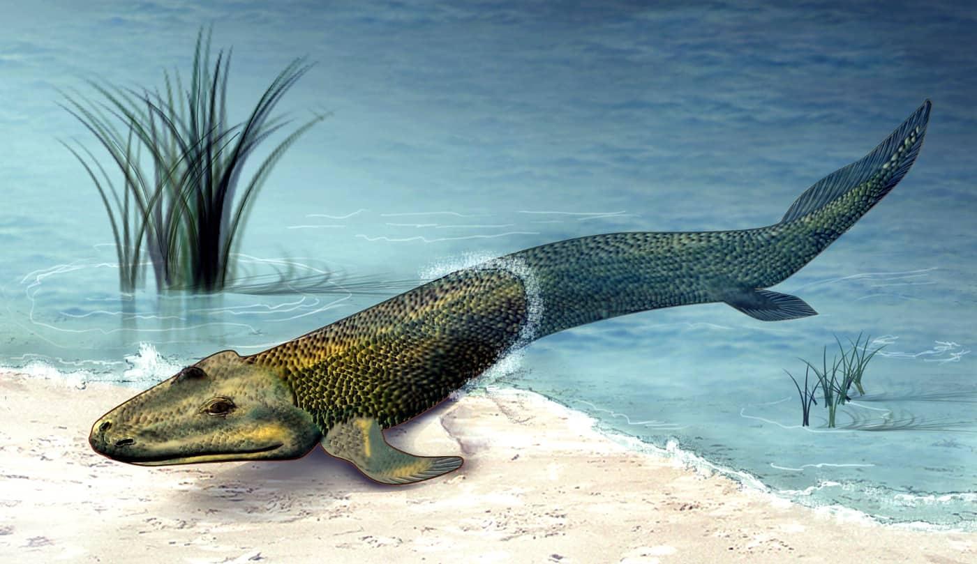 На видео из Китая рыбам надоел их пруд и они устроили массовое переселение. А заодно оживили мем про эволюцию
