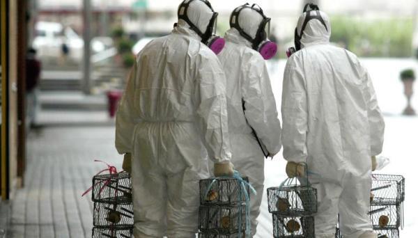 """Крысы начали заражать китайцев """"своим"""" гепатитом. Похоже, летучие мыши - не единственные, кто насолит людям"""
