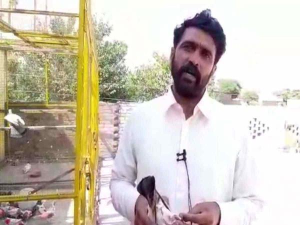 Спецслужбы Индии не могли разгадать шифр с лапы голубя-шпиона. Но им помог селянин - это был его телефон