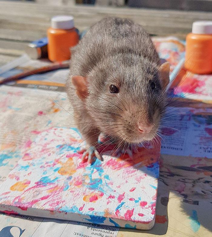 Девушка покоряет Сеть благодаря своим крысам. Ведь - они талантливые художники, которые этим зарабатывают