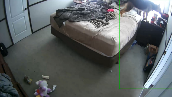 Девушка показала, что делает пёс с её одеждой, пока он один дома. После такого его хочется не ругать, а обнять