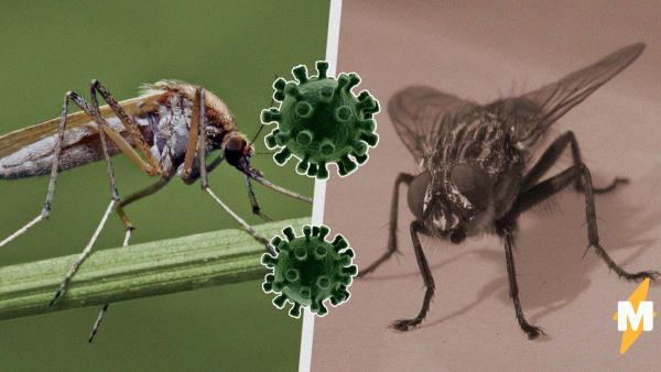 Могут ли насекомые переносить коронавирус? Возможно, но не совсем как в Plague Inc.