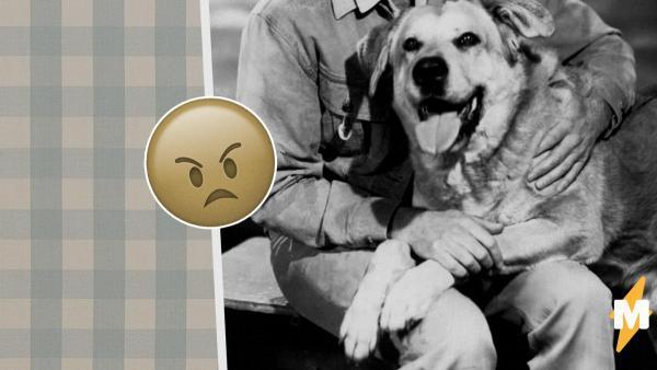 Парень спас с улицы собаку, но героем не стал. Случайно узнав историю пса, он понял, что брать его было нельзя