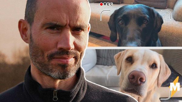 У спортивного тележурналиста закончились темы для новостей, и он позвал в эфир собак. Выпуск стал только лучше